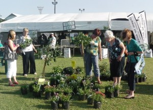 Plant lovers looking at the plants at the Indigenous Plant Fair. Picture by: Mhlengi Mafu