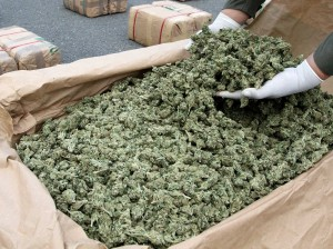 Marijuana was found pictures from:  http://www.saps.gov.za/